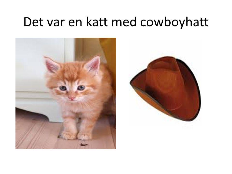 Det var en katt med cowboyhatt