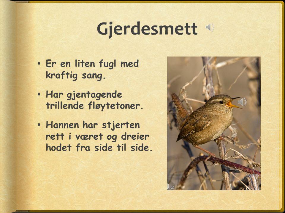 Gjerdesmett  Er en liten fugl med kraftig sang. Har gjentagende trillende fløytetoner.