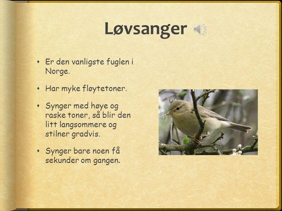 Løvsanger  Er den vanligste fuglen i Norge. Har myke fløytetoner.
