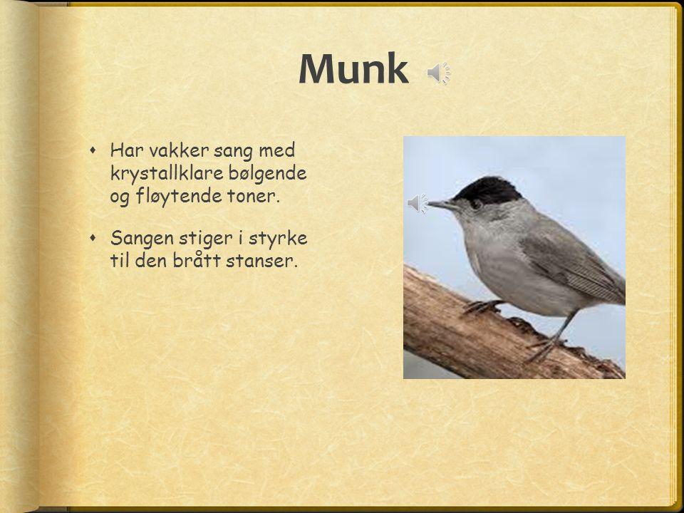 Munk  Har vakker sang med krystallklare bølgende og fløytende toner.