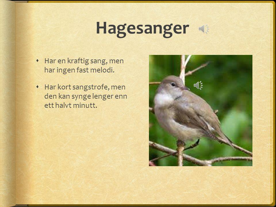 Hagesanger  Har en kraftig sang, men har ingen fast melodi.