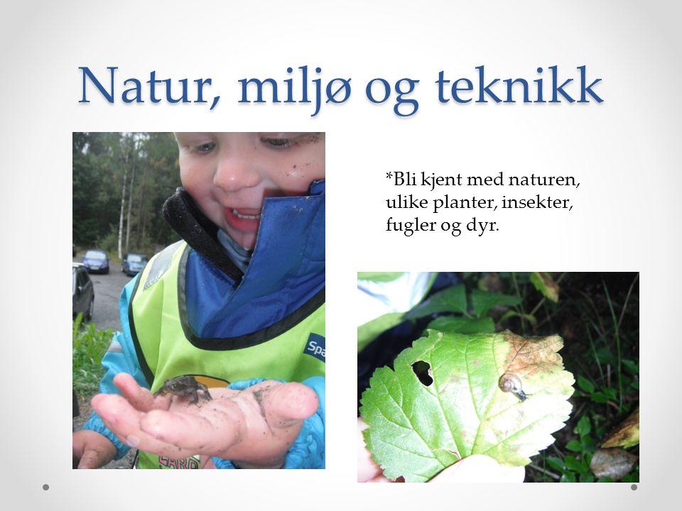Natur, miljø og teknikk *Bli kjent med naturen, ulike planter, insekter, fugler og dyr.