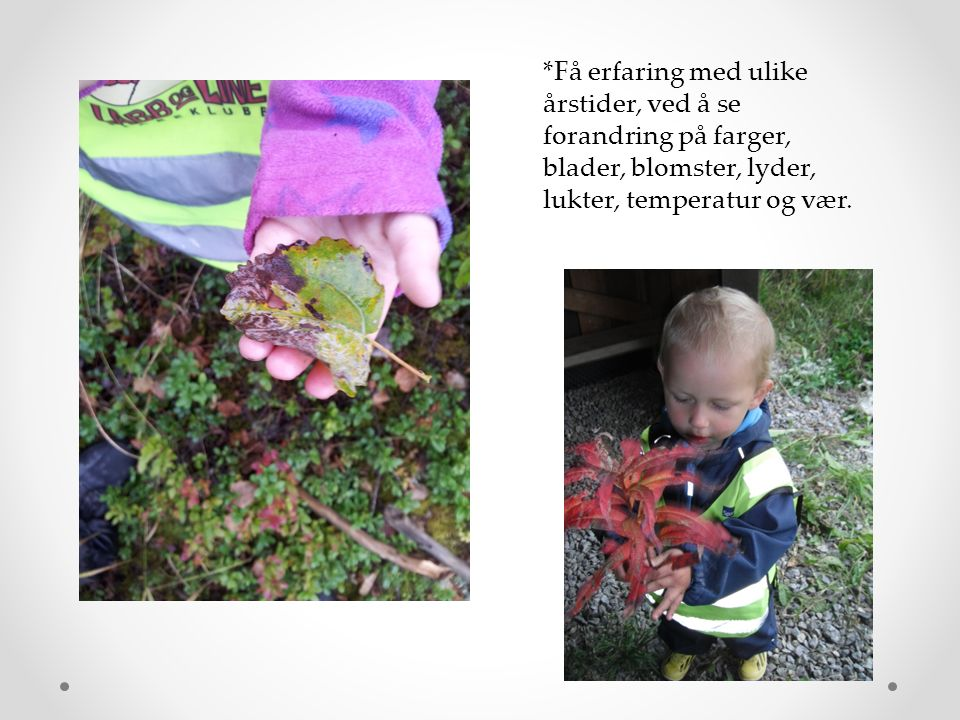 i *Få erfaring med ulike årstider, ved å se forandring på farger, blader, blomster, lyder, lukter, temperatur og vær.