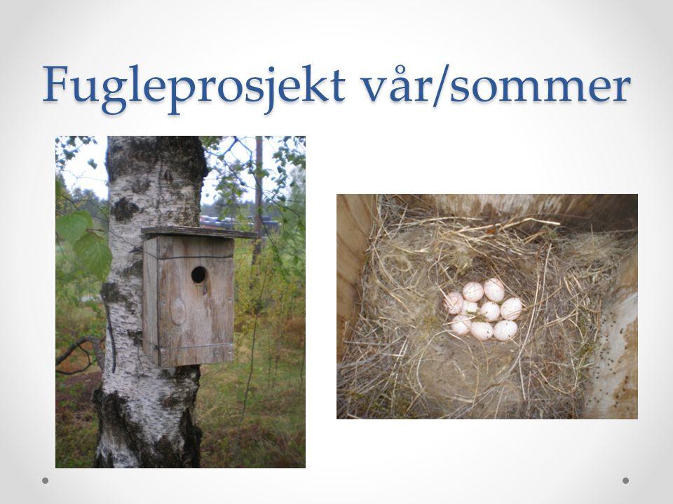 Fugleprosjekt vår/sommer