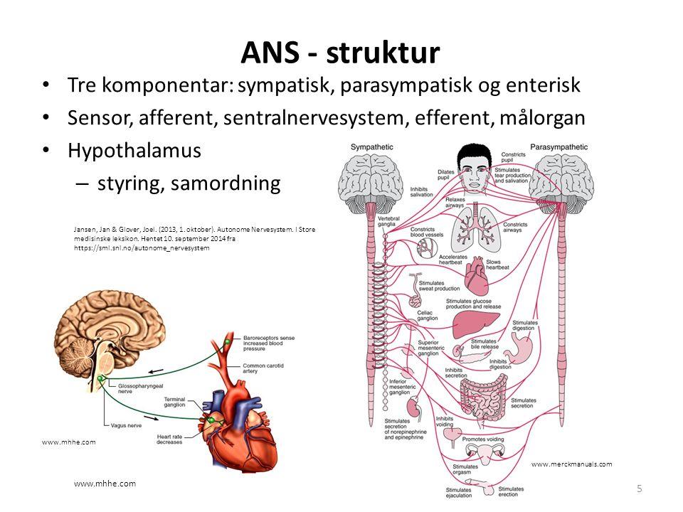 ANS - struktur Tre komponentar: sympatisk, parasympatisk og enterisk Sensor, afferent, sentralnervesystem, efferent, målorgan Hypothalamus – styring,