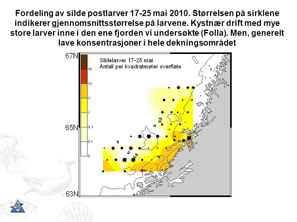 Fordeling av silde postlarver 17-25 mai 2010. Størrelsen på sirklene indikerer gjennomsnittsstørrelse på larvene. Kystnær drift med mye store larver i