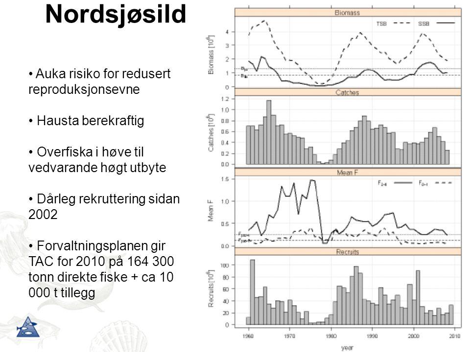 Nordsjøsild Auka risiko for redusert reproduksjonsevne Hausta berekraftig Overfiska i høve til vedvarande høgt utbyte Dårleg rekruttering sidan 2002 F