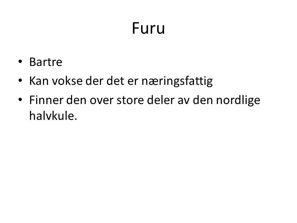 Furu Bartre Kan vokse der det er næringsfattig Finner den over store deler av den nordlige halvkule.