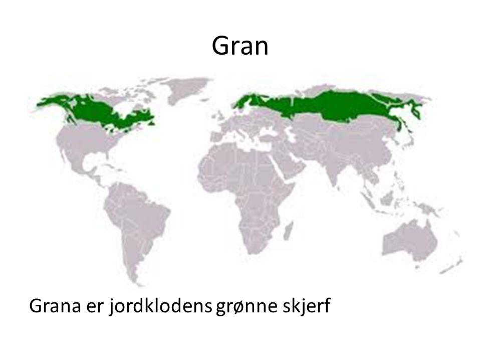 Gran Grana er jordklodens grønne skjerf