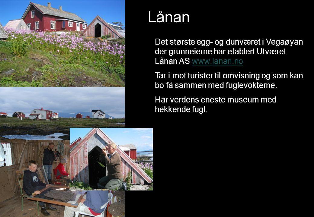 Lånan Det største egg- og dunværet i Vegaøyan der grunneierne har etablert Utværet Lånan AS www.lanan.nowww.lanan.no Tar i mot turister til omvisning