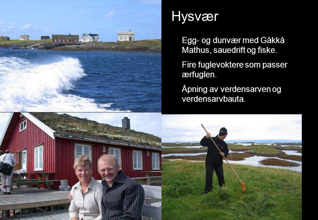 Hysvær Egg- og dunvær med Gåkkå Mathus, sauedrift og fiske. Fire fuglevoktere som passer ærfuglen. Åpning av verdensarven og verdensarvbauta.