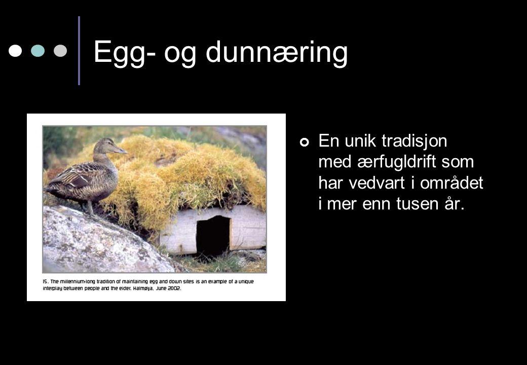 Egg- og dunnæring En unik tradisjon med ærfugldrift som har vedvart i området i mer enn tusen år.