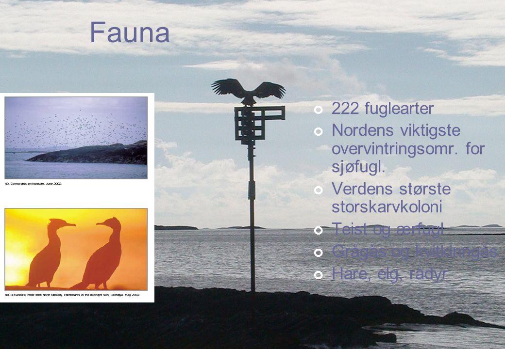 Fauna 222 fuglearter Nordens viktigste overvintringsomr. for sjøfugl. Verdens største storskarvkoloni Teist og ærfugl Grågås og kvitkinngås Hare, elg,