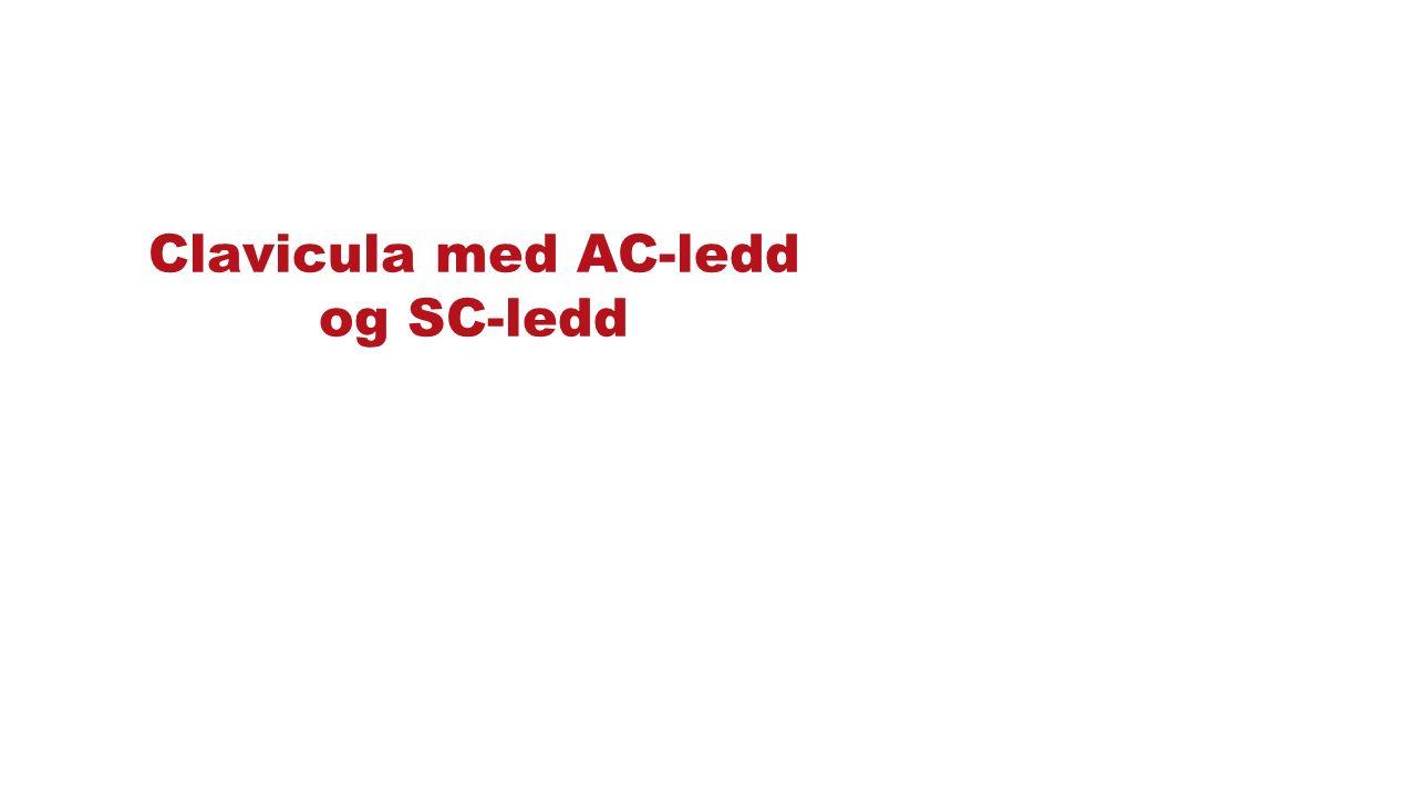 Clavicula med AC-ledd og SC-ledd