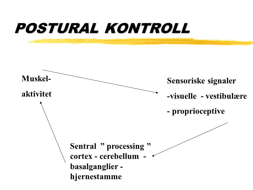 "POSTURAL KONTROLL Muskel- aktivitet Sensoriske signaler -visuelle - vestibulære - proprioceptive Sentral "" processing "" cortex - cerebellum - basalgan"