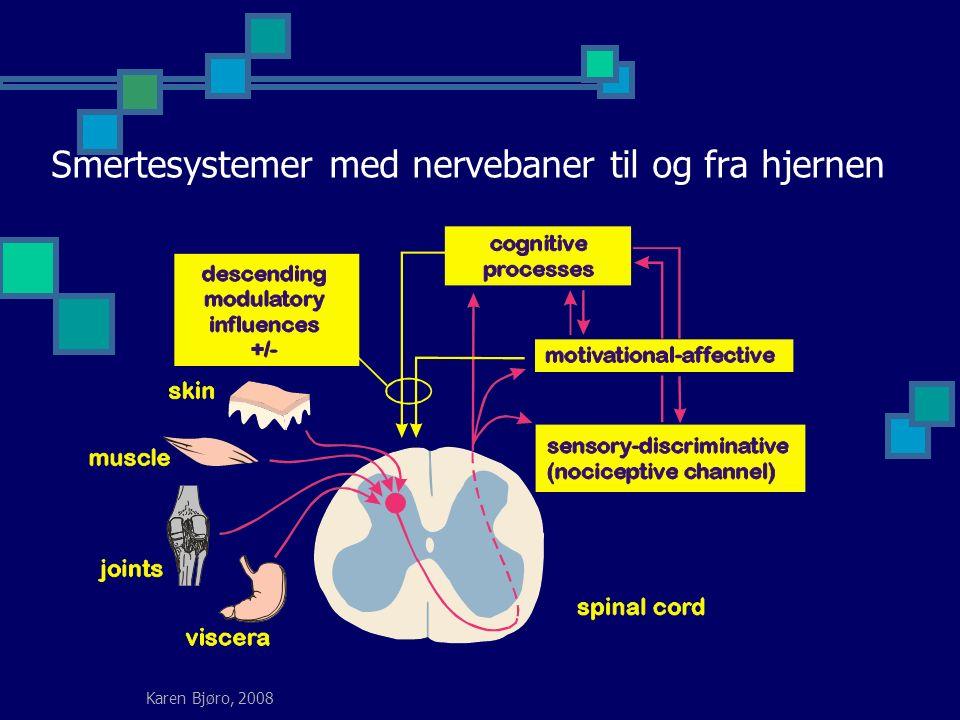 Karen Bjøro, 2008 Smertesystemer med nervebaner til og fra hjernen