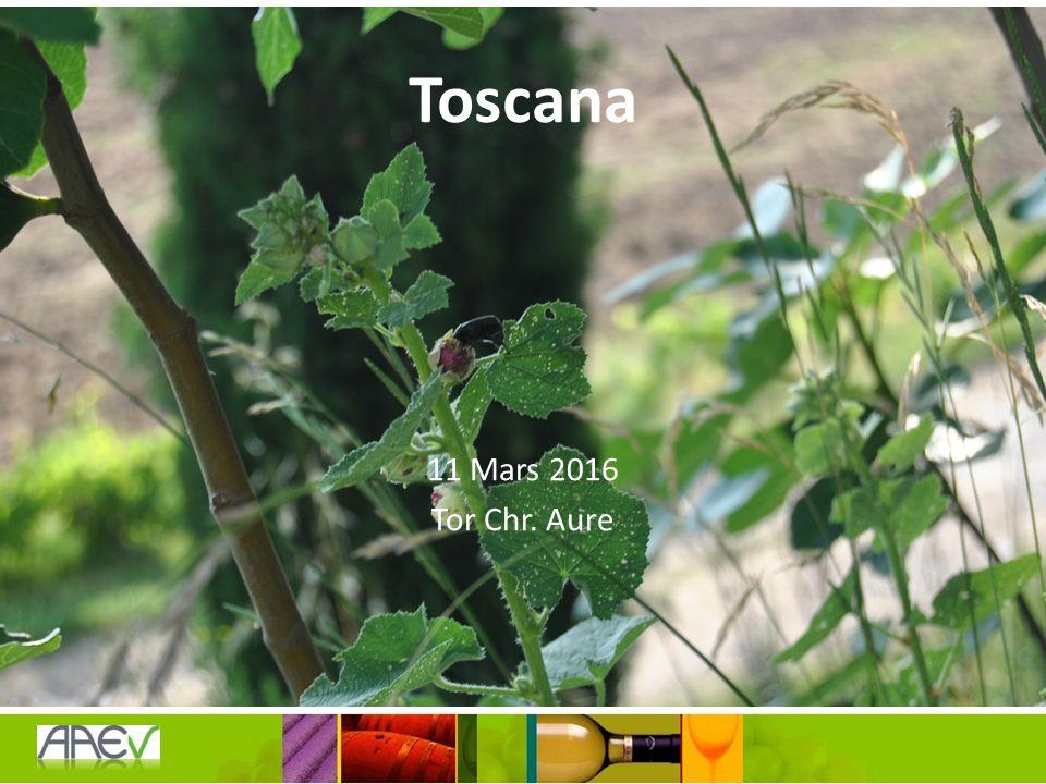 Quiz Hva var Montalcino kjent for før 1865 og hvilke drue var hoved-druen i området da.