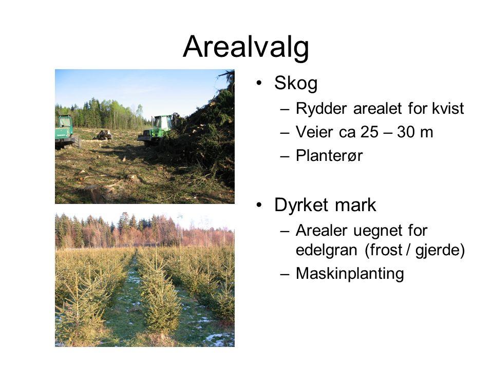 Skog –Rydder arealet for kvist –Veier ca 25 – 30 m –Planterør Dyrket mark –Arealer uegnet for edelgran (frost / gjerde) –Maskinplanting Arealvalg