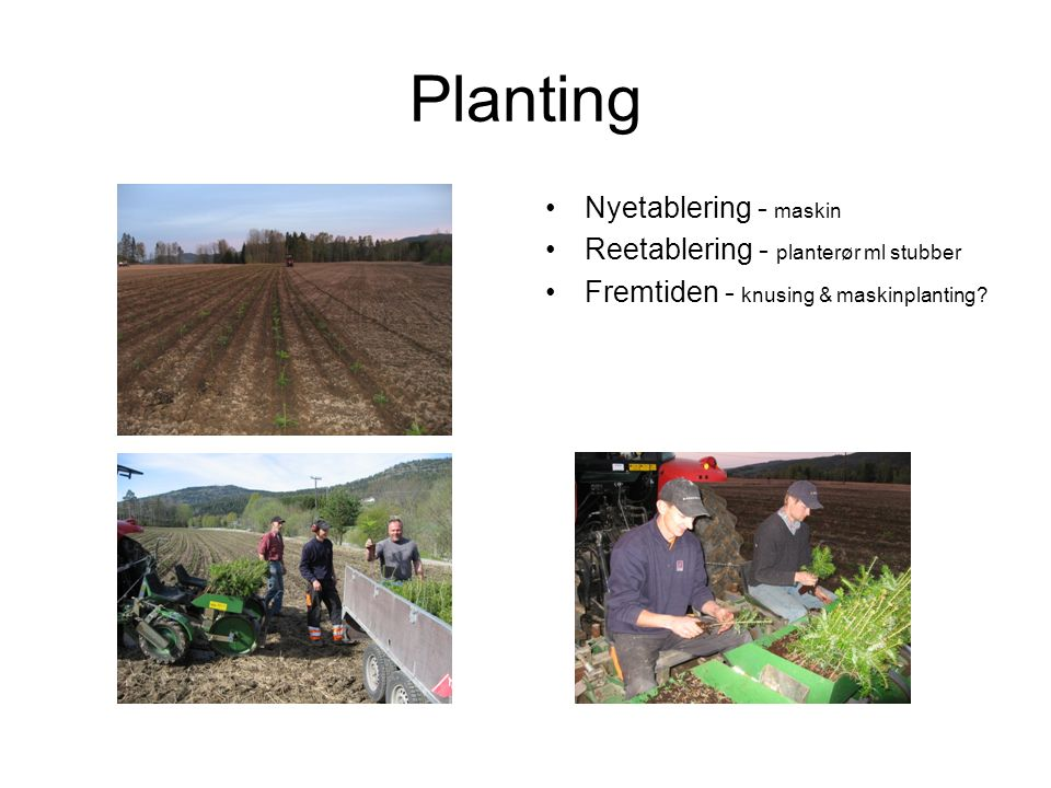 Planting Nyetablering - maskin Reetablering - planterør ml stubber Fremtiden - knusing & maskinplanting?