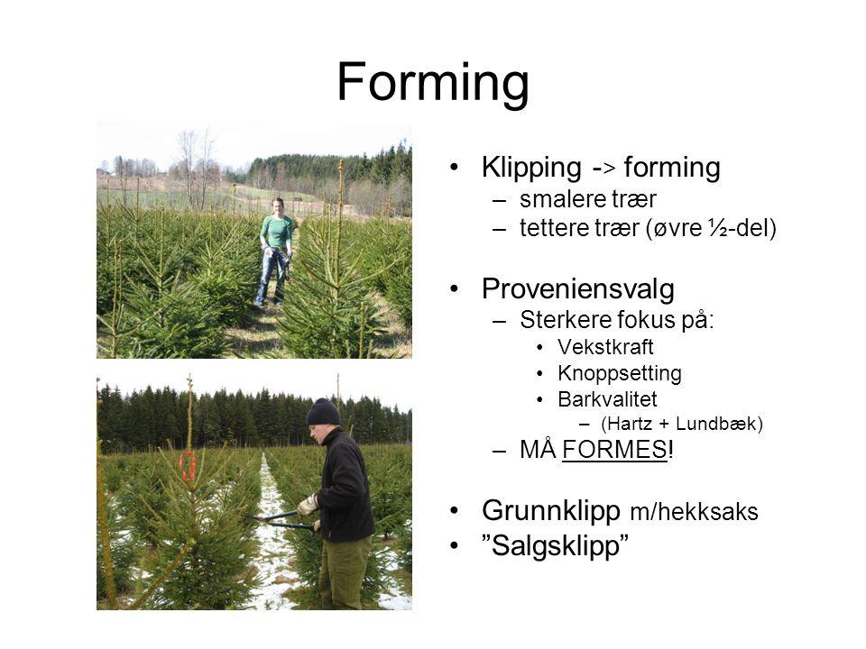 Forming Klipping - > forming –smalere trær –tettere trær (øvre ½-del) Proveniensvalg –Sterkere fokus på: Vekstkraft Knoppsetting Barkvalitet –(Hartz + Lundbæk) –MÅ FORMES.