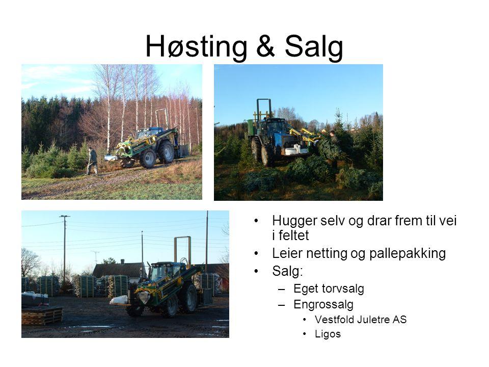 Høsting & Salg Hugger selv og drar frem til vei i feltet Leier netting og pallepakking Salg: –Eget torvsalg –Engrossalg Vestfold Juletre AS Ligos