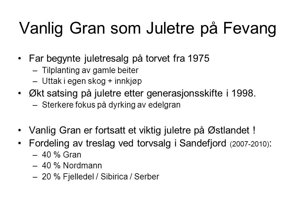 Vanlig Gran som Juletre på Fevang Far begynte juletresalg på torvet fra 1975 –Tilplanting av gamle beiter –Uttak i egen skog + innkjøp Økt satsing på juletre etter generasjonsskifte i 1998.