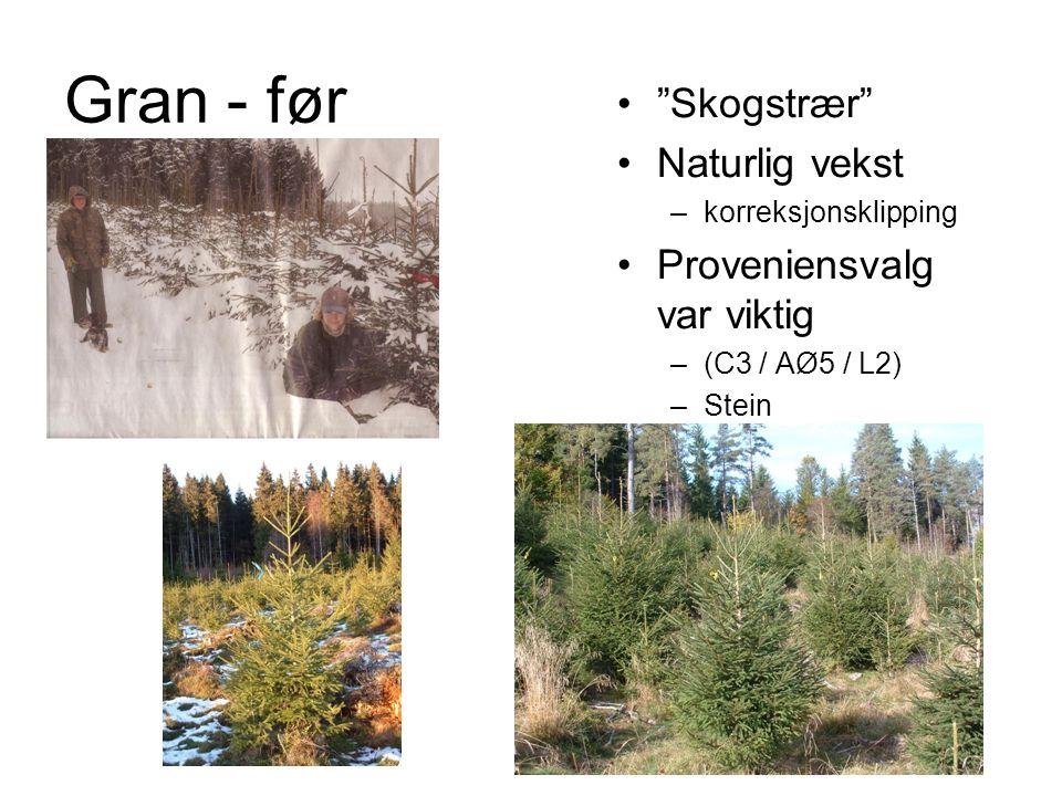 Gran - før Skogstrær Naturlig vekst –korreksjonsklipping Proveniensvalg var viktig –(C3 / AØ5 / L2) –Stein