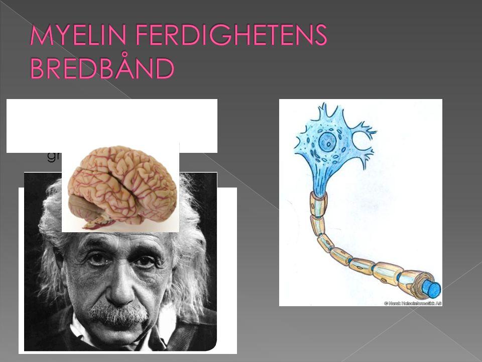  Myelin, er av sentrale nevrologer nå sett på som læringens «hellige gral».  Når vi fyrer nervecellene på «rette» måten vil det bygges tykkere lagre