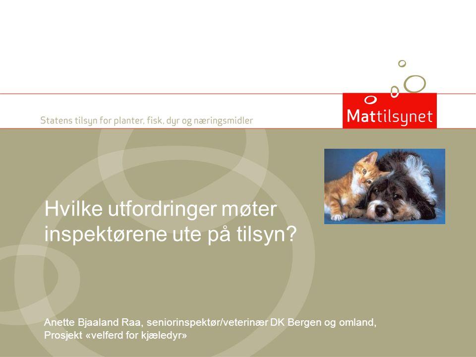 Hvilke utfordringer møter inspektørene ute på tilsyn? Anette Bjaaland Raa, seniorinspektør/veterinær DK Bergen og omland, Prosjekt «velferd for kjæled