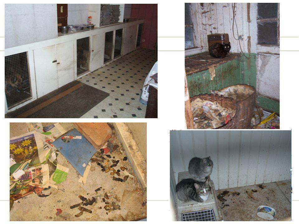 Bilde av dårlig dyrehold