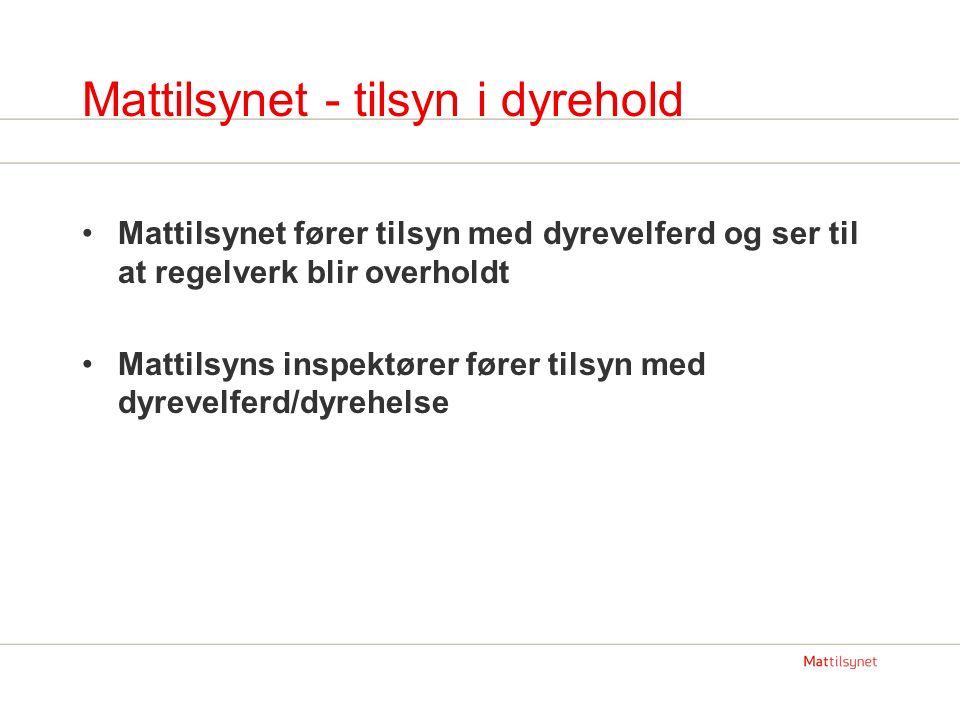 Mattilsynet - tilsyn i dyrehold Mattilsynet fører tilsyn med dyrevelferd og ser til at regelverk blir overholdt Mattilsyns inspektører fører tilsyn me