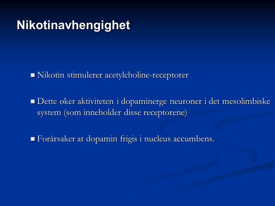 Nikotinavhengighet Nikotin stimulerer acetylcholine-receptorer Nikotin stimulerer acetylcholine-receptorer Dette øker aktiviteten i dopaminerge neuroner i det mesolimbiske system (som inneholder disse receptorene) Dette øker aktiviteten i dopaminerge neuroner i det mesolimbiske system (som inneholder disse receptorene) Forårsaker at dopamin frigis i nucleus accumbens.