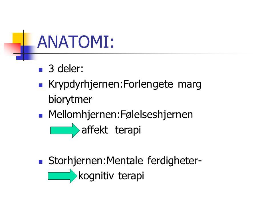 ANATOMI: 3 deler: Krypdyrhjernen:Forlengete marg biorytmer Mellomhjernen:Følelseshjernen affekt terapi Storhjernen:Mentale ferdigheter- kognitiv terapi
