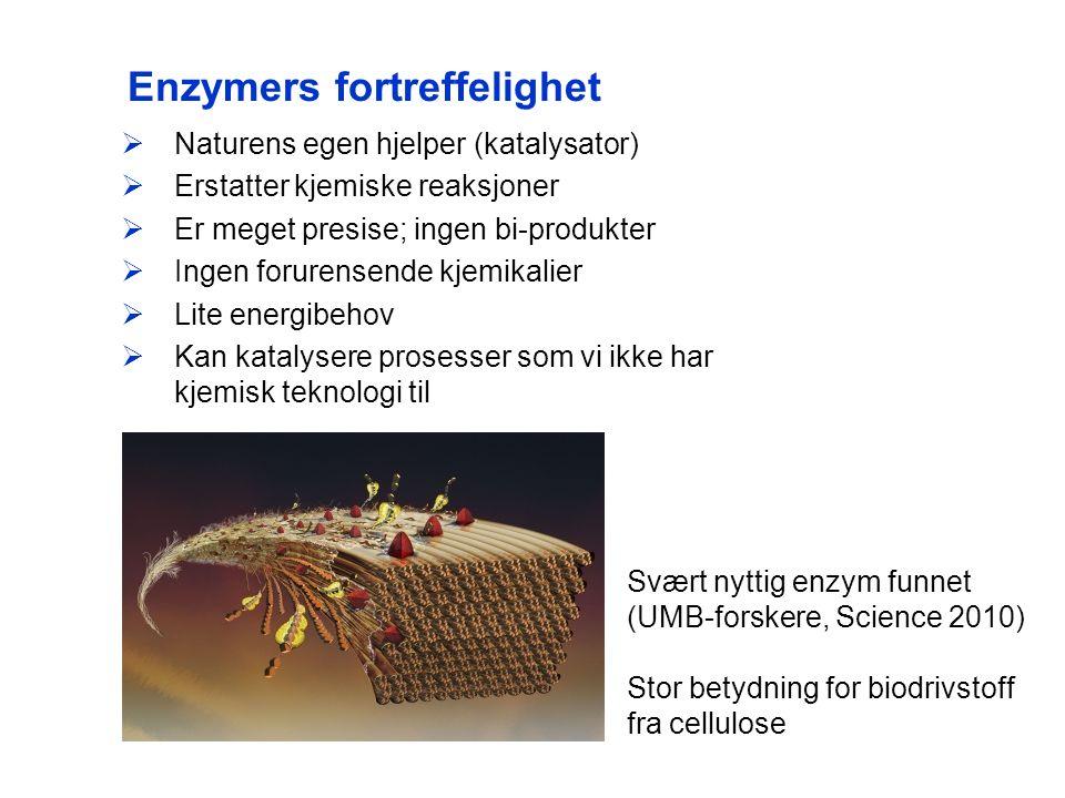 Enzymers fortreffelighet  Naturens egen hjelper (katalysator)  Erstatter kjemiske reaksjoner  Er meget presise; ingen bi-produkter  Ingen forurensende kjemikalier  Lite energibehov  Kan katalysere prosesser som vi ikke har kjemisk teknologi til Svært nyttig enzym funnet (UMB-forskere, Science 2010) Stor betydning for biodrivstoff fra cellulose
