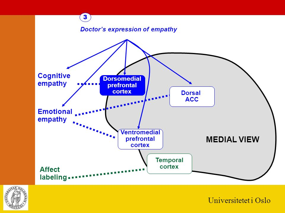 Universitetet i Oslo Ventromedial prefrontal cortex Dorsal ACC Dorsomedial prefrontal cortex Cognitive empathy Emotional empathy Affect labeling Temporal cortex MEDIAL VIEW Doctor's expression of empathy 3