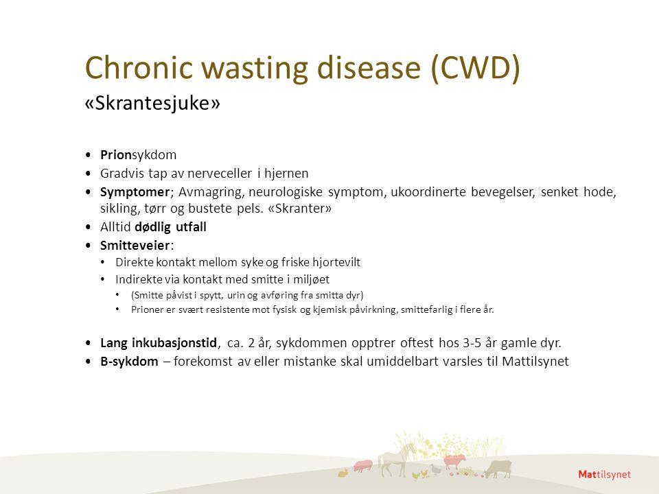 Chronic wasting disease (CWD) Prionsykdom Gradvis tap av nerveceller i hjernen Symptomer; Avmagring, neurologiske symptom, ukoordinerte bevegelser, senket hode, sikling, tørr og bustete pels.