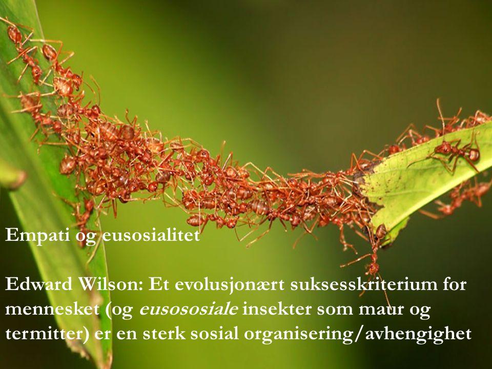 Empati og eusosialitet Edward Wilson: Et evolusjonært suksesskriterium for mennesket (og eusososiale insekter som maur og termitter) er en sterk sosial organisering/avhengighet
