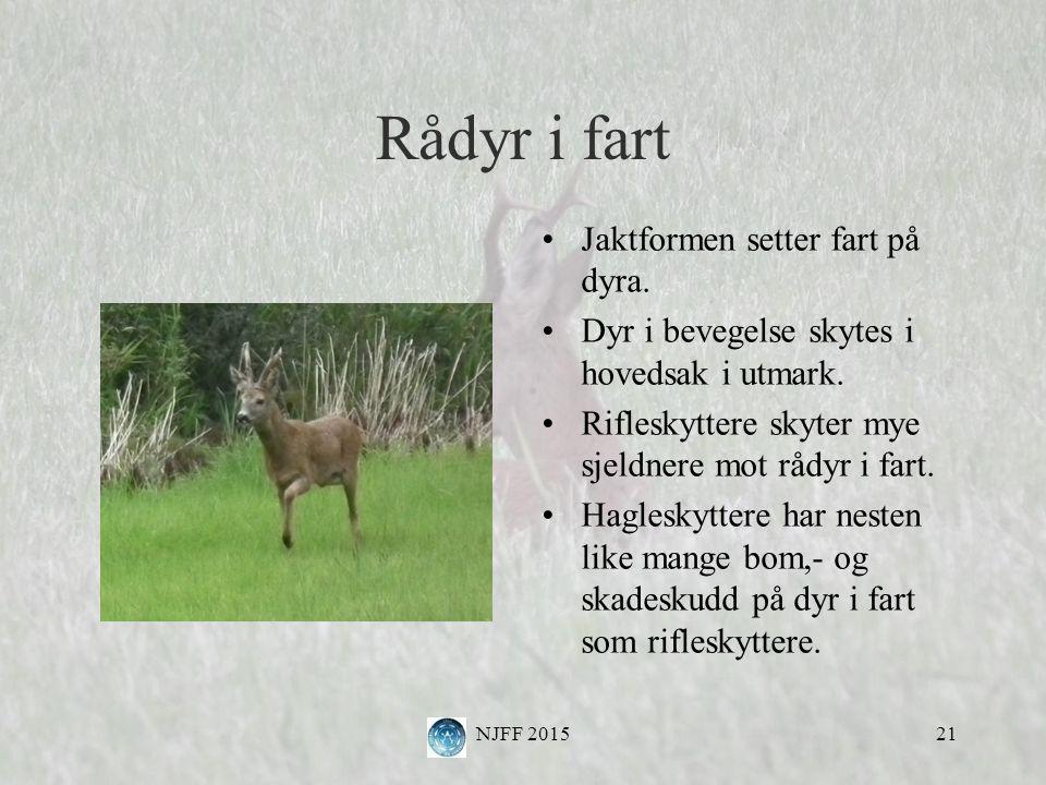 Rådyr i fart Jaktformen setter fart på dyra. Dyr i bevegelse skytes i hovedsak i utmark.