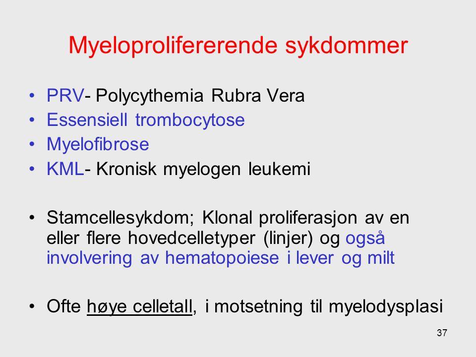 Myeloprolifererende sykdommer PRV- Polycythemia Rubra Vera Essensiell trombocytose Myelofibrose KML- Kronisk myelogen leukemi Stamcellesykdom; Klonal proliferasjon av en eller flere hovedcelletyper (linjer) og også involvering av hematopoiese i lever og milt Ofte høye celletall, i motsetning til myelodysplasi 37