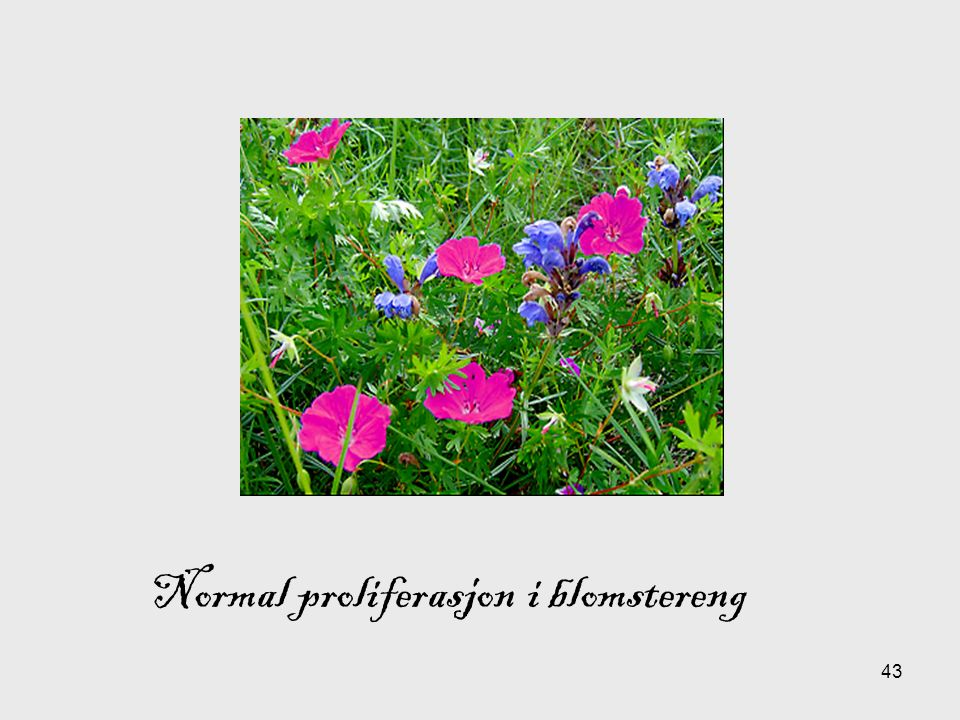 43 Normal proliferasjon i blomstereng