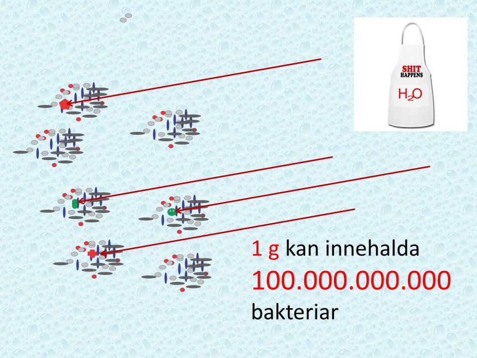 1 g kan innehalda 100.000.000.000 bakteriar