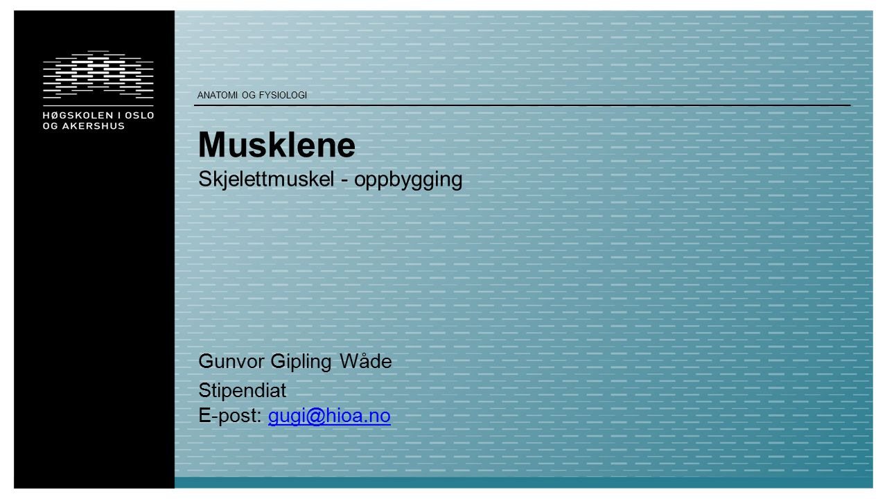 Musklene Skjelettmuskel - oppbygging Gunvor Gipling Wåde Stipendiat E-post: gugi@hioa.nogugi@hioa.no ANATOMI OG FYSIOLOGI