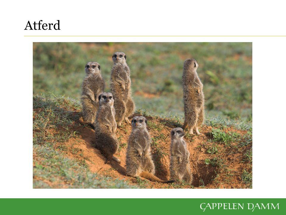 Atferd en viktig del av organismers karaktertrekk Adferd er ofte en blanding av nedarvede og tillærte måter å reagere på film: Se ekornmor som flytter ungene sine til et tryggere sted (ca.
