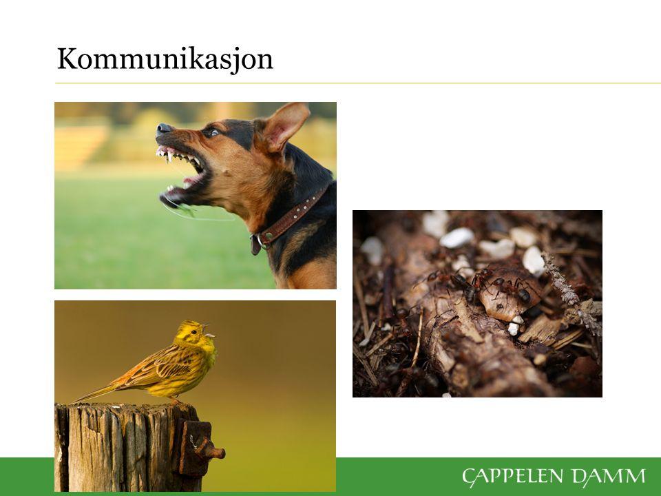 Mye av dyrs atferd er signaler til andre individer Et viktig «språk» Lyd, visuelt (syn) og lukt Eks.