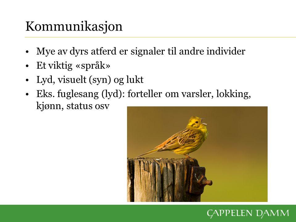 Kommunikasjon Visuell kommunikasjon: det vi ser.