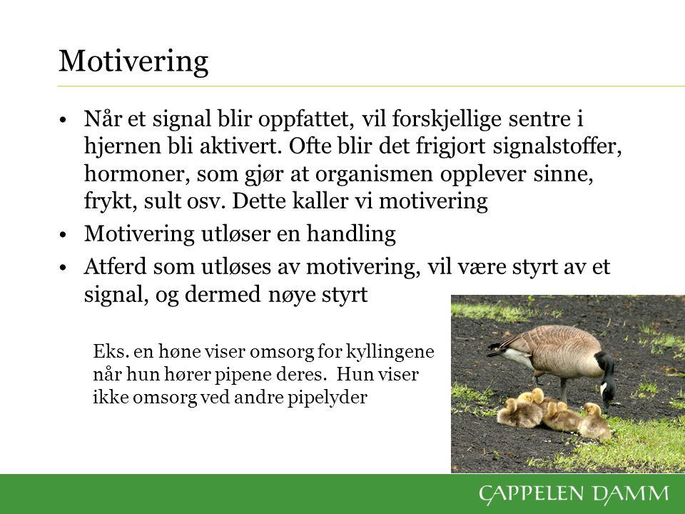 Pregning Mange dyreunger blir påvirket av hvem de har kontakt med en viss periode i oppveksten Dette kalles pregning Den sveitsiske zoologen Konrad Lorenz forsket mye på atferd hos dyr