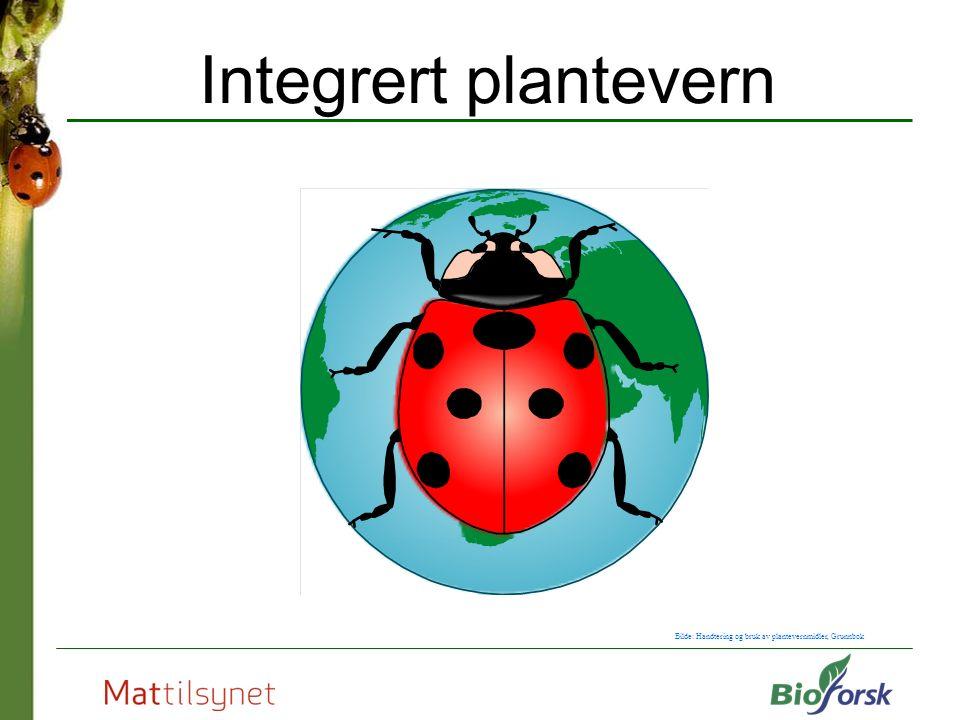 Integrert plantevern Bilde: Handtering og bruk av plantevernmidler, Grunnbok