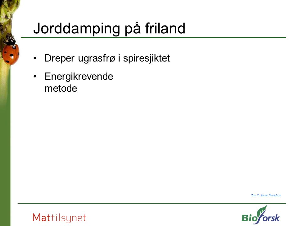 Jorddamping på friland Dreper ugrasfrø i spiresjiktet Energikrevende metode Foto: H.