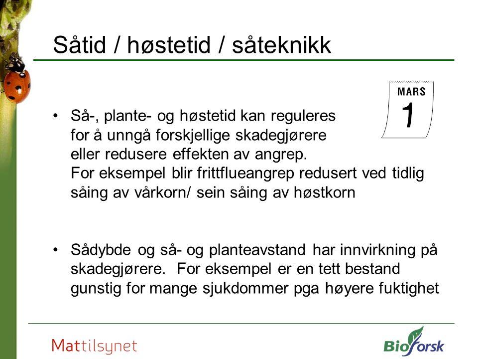 Såtid / høstetid / såteknikk Så-, plante- og høstetid kan reguleres for å unngå forskjellige skadegjørere eller redusere effekten av angrep.