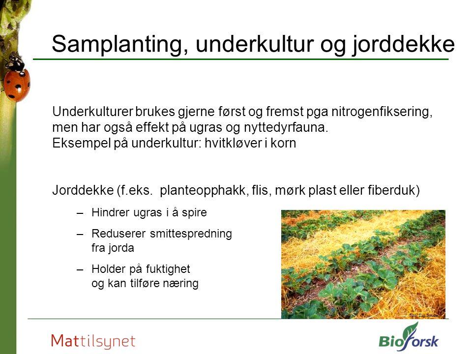 Samplanting, underkultur og jorddekke Underkulturer brukes gjerne først og fremst pga nitrogenfiksering, men har også effekt på ugras og nyttedyrfauna.